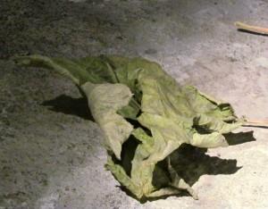 Installation Blätter (Ausschnitt) Kunstlicht - Velten, 2012, gewachstes Blatt