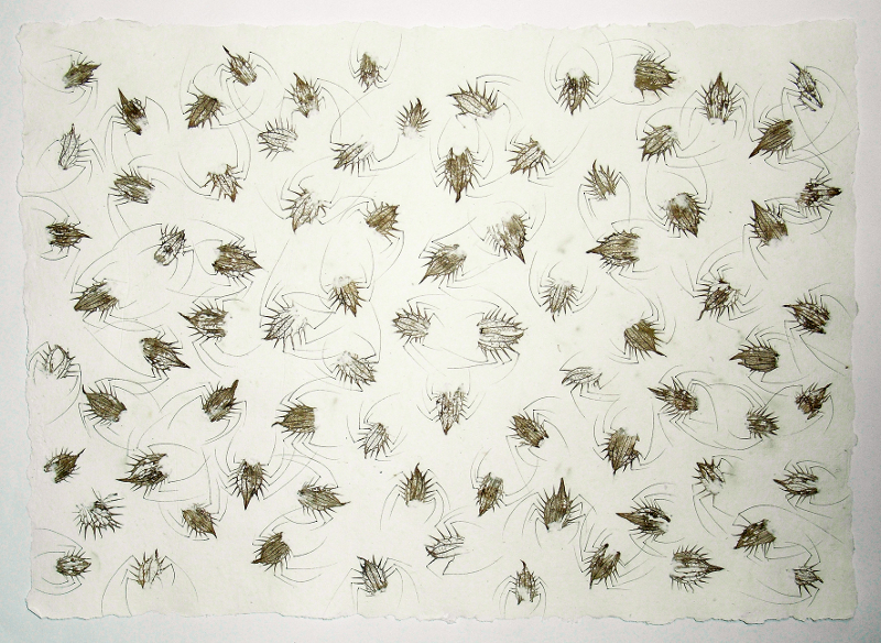 Schwarm oder Metamorphose der Distel, 2011, Recyclingbütten, Distel, Tusche, 60x80 cm