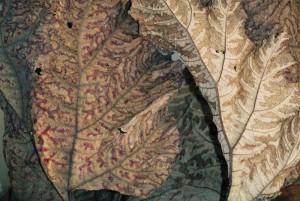 Blätter, getrocknet - erstarrt - verwandelt